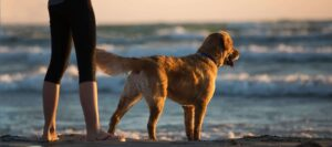 Dog-with-mentor-on-sea-shore
